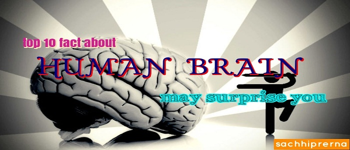human brain surprising fact