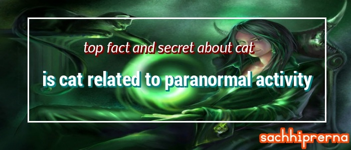 top fact and secret about cat